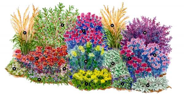 Droogtebestendige plantenborder