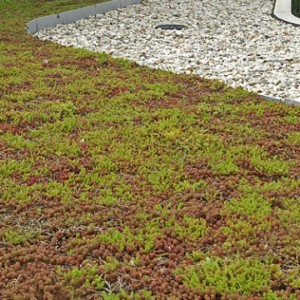 Dakbegroeiing en daktuinen