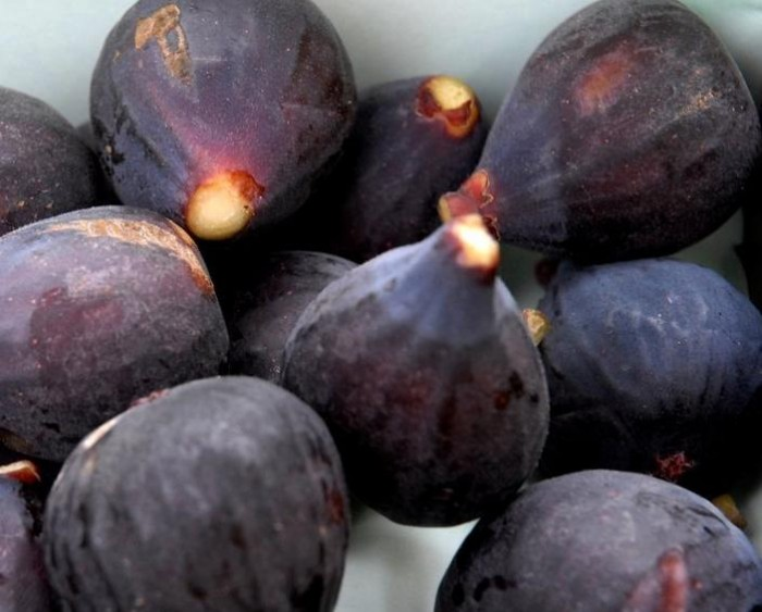 Vijg 'Rouge de Bordeaux' (Ficus carica 'Rouge de Bordeaux') 4.jpg