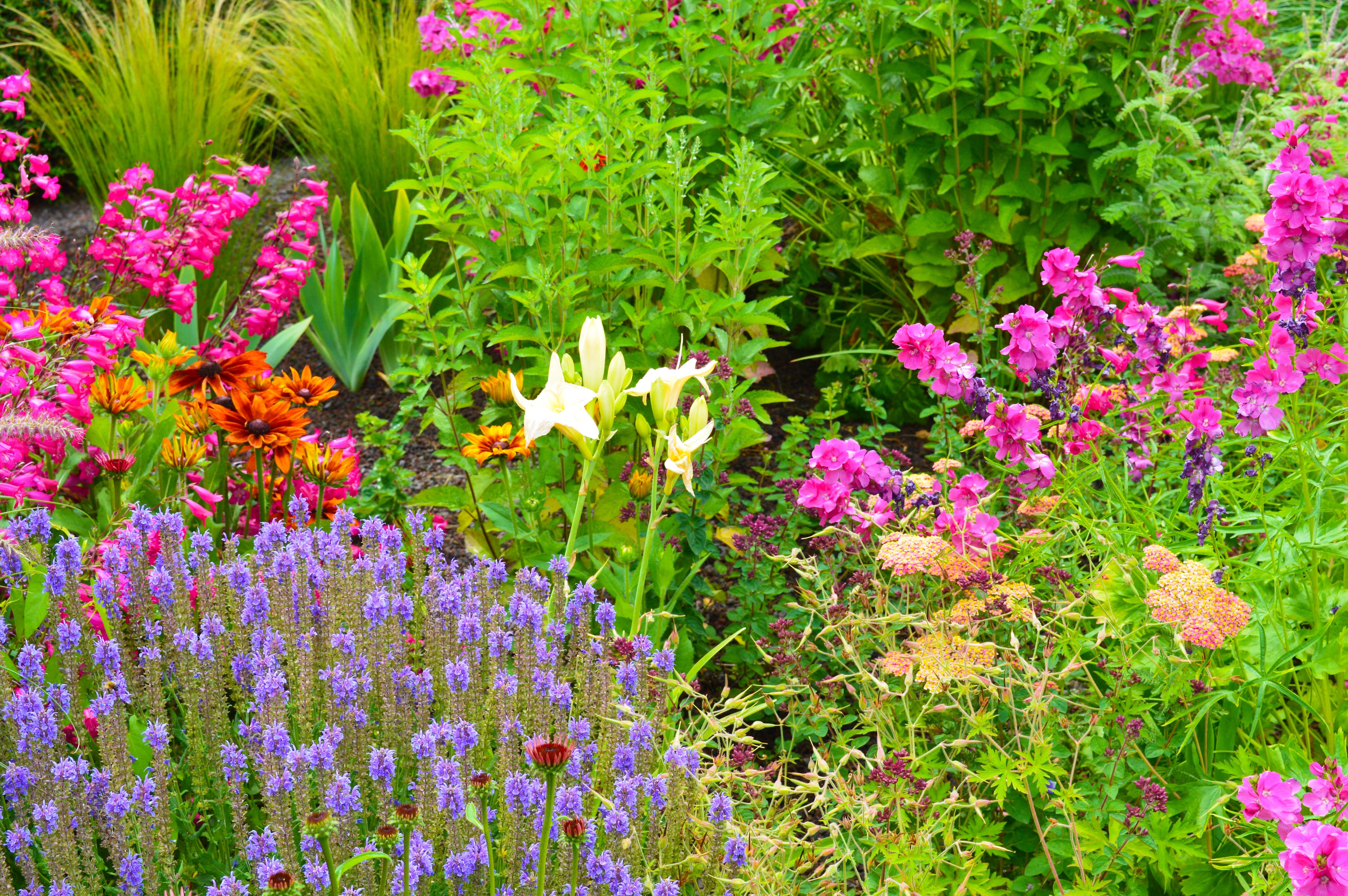 Prairieborder | De Tuinen van Appeltern