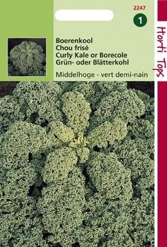 Boerenkool fijn gekrulde (zaad Brassica oleracea var. laciniata) 12247.jpg