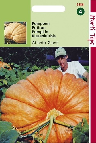 Pompoen Atlantic Giant (reuzenpompoenen zaad).jpg