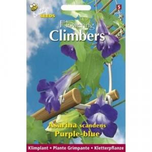 Flowering Climbers Asarina Scandens (zaad).jpg