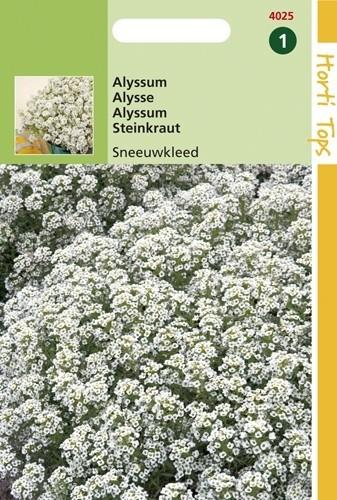 Alyssum procumbens (Rotsschild, Sneeuwkleed, zaad).jpg