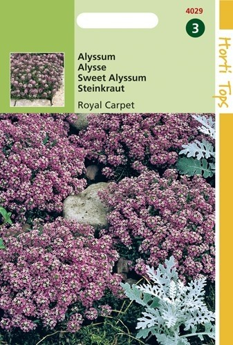 Alyssum Royal Carpet (Rotsschild, zaad).jpg