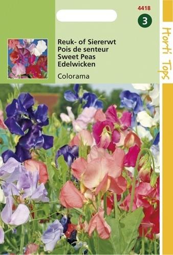 Lathyrus odoratus multiflora Colorama (zaad hoge Reuk- of Siererwt).jpg