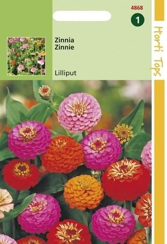 Zinnia elegans Lilliput (zaad pompon-zinnia's).jpg