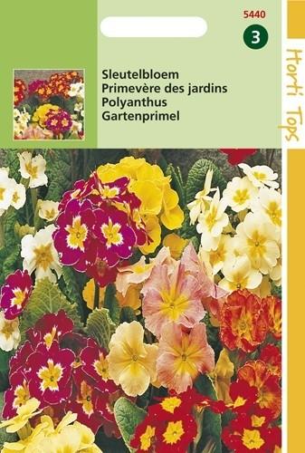 Primula elatior (zaad Sleutelbloem kleurenmengsel).jpg