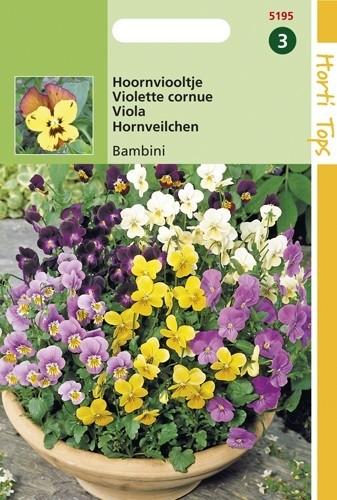 Viola cornuta Bambini (zaad Hoornviooltje, kleinbloemige viool).jpg