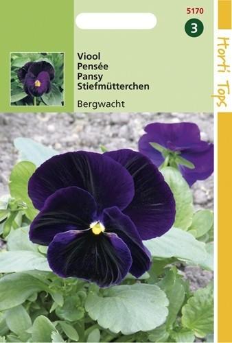 Viola wittrockiana Berna (zaad Violetblauwe viool).jpg