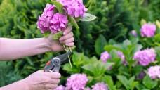 Knippen voor meer én sterkere bloemen!