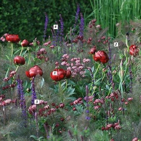 Beplantingsplan - Thea Visser
