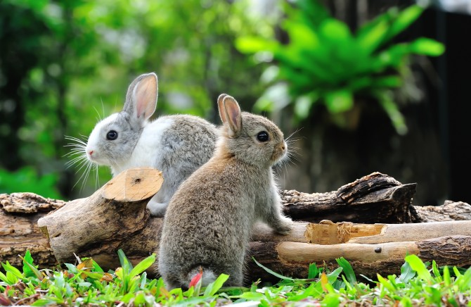 Met welke planten houd ik konijnen uit mijn tuin? | De Tuinen van Appeltern