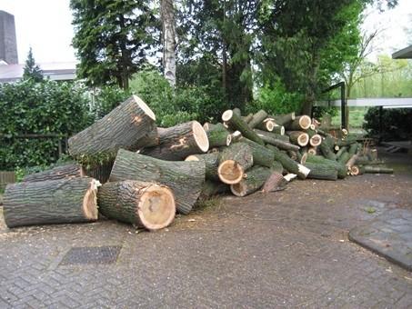 Vellen & Rooien van bomen (2).jpg