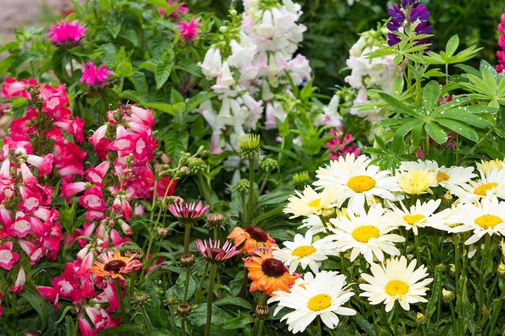 Alle borders bloeien | De Tuinen van Appeltern