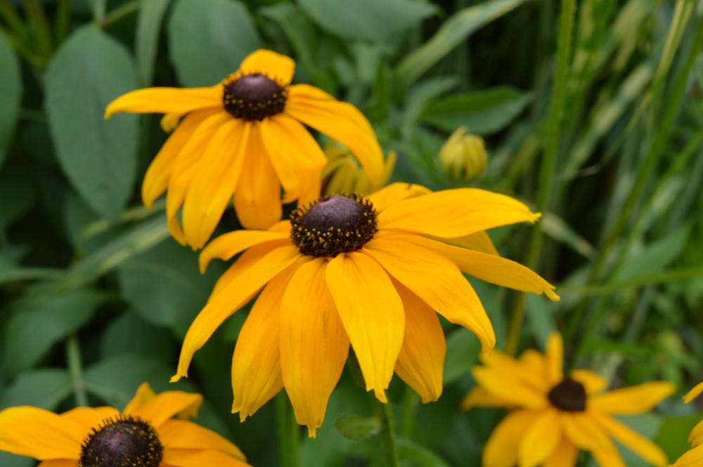 Prairieborder - De Tuinen van Appeltern