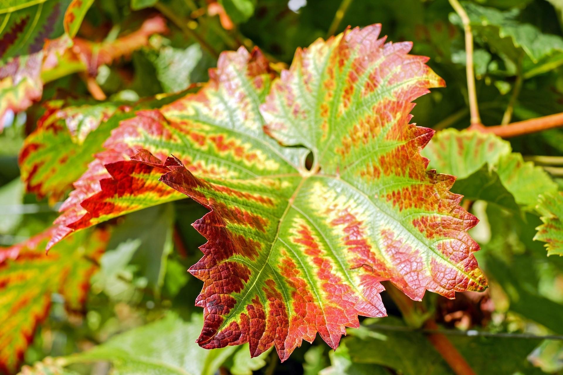 Droogte- en hittebestendige planten