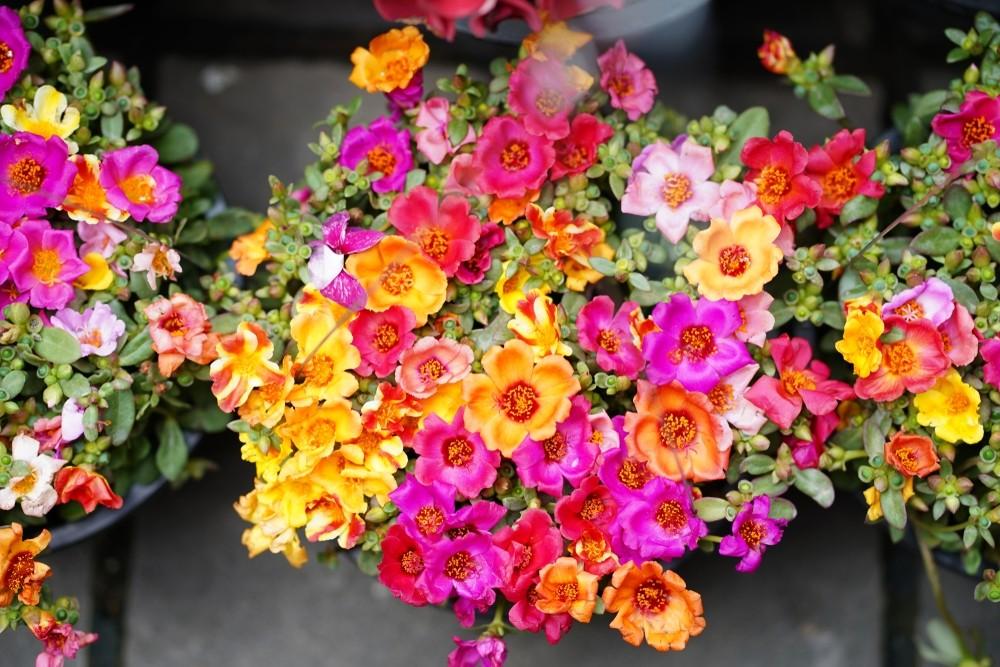 Bloempottenfeest - De Tuinen van Appeltern
