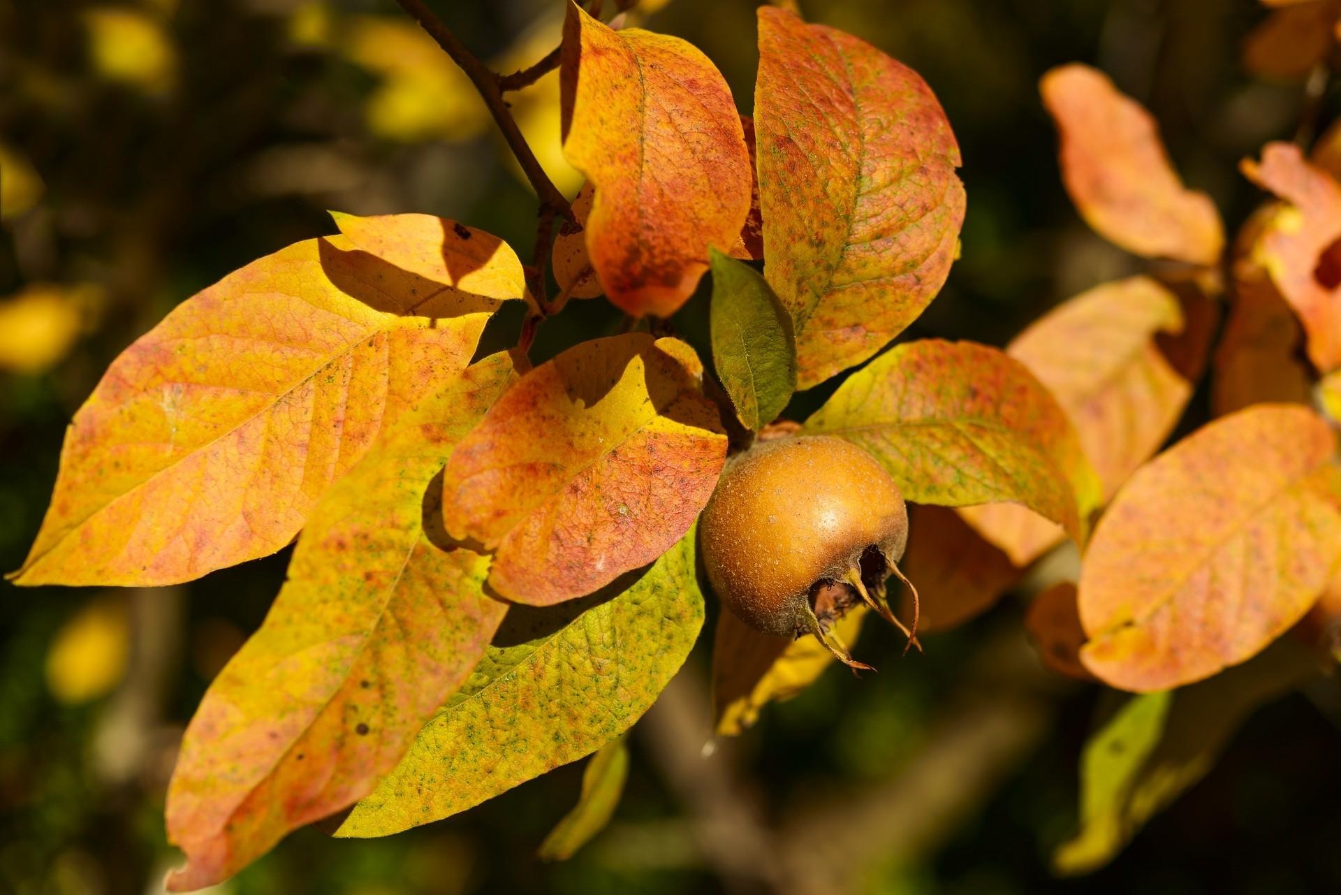 Vruchtensmaak en herfstkleur - De Tuinen van Appeltern