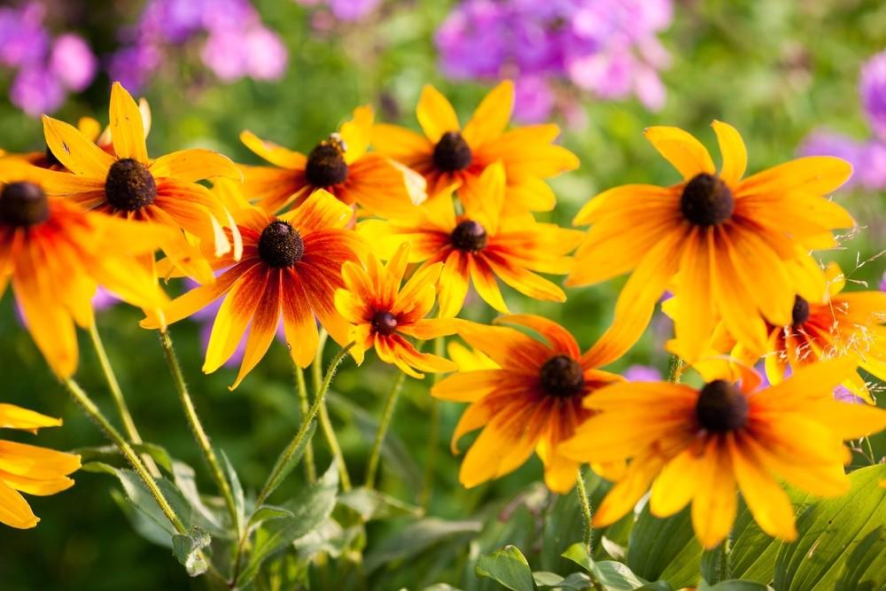 Tuintrends 2019 - De Tuinen van Appeltern