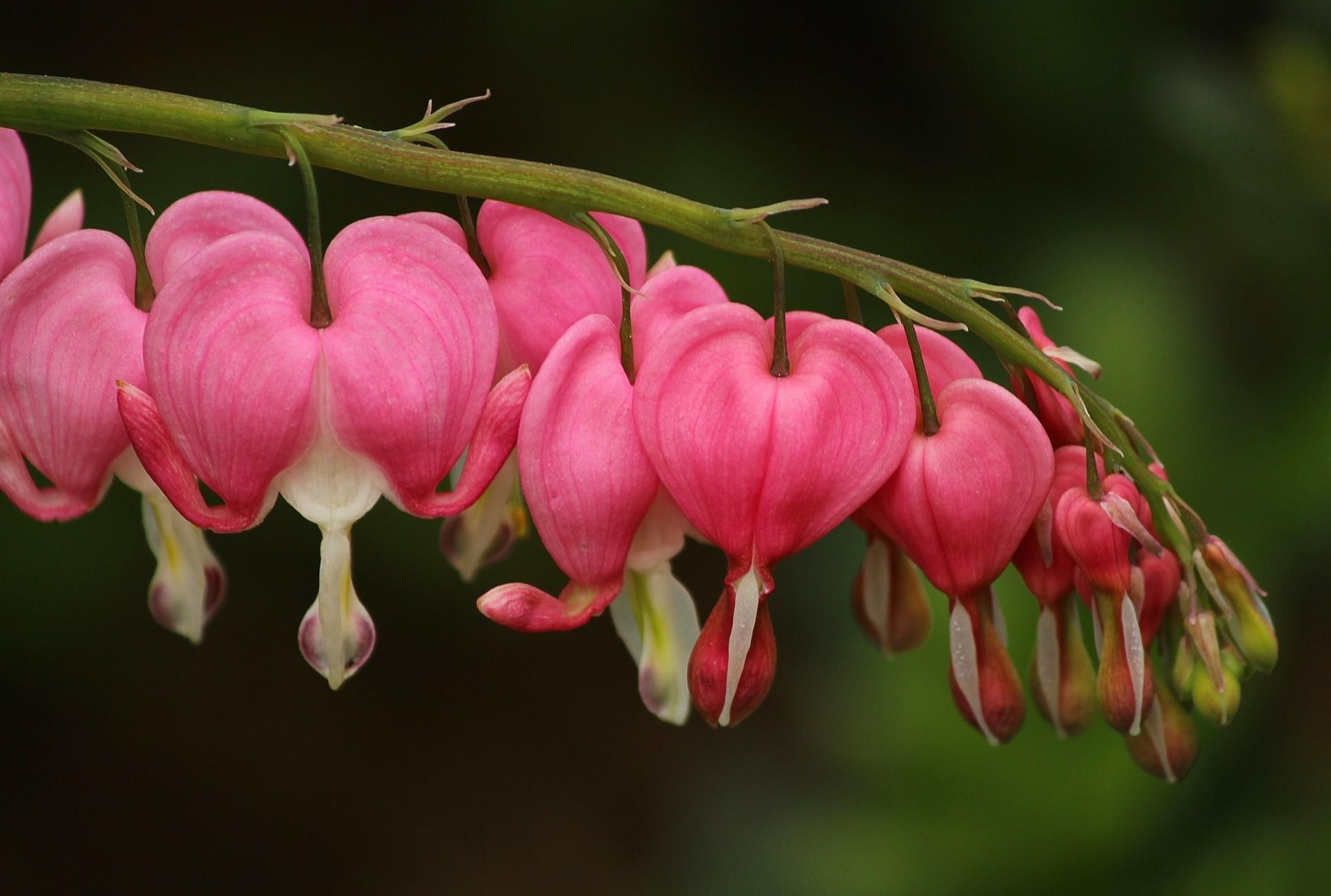 Gebroken hartje - De Tuinen van Appeltern
