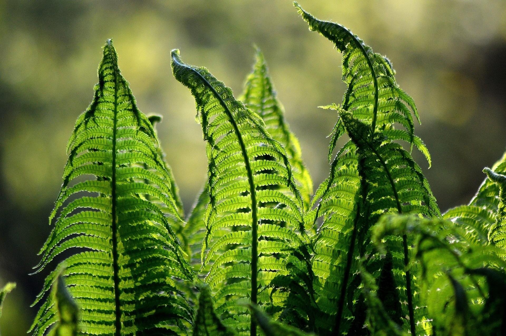 Inplanten van vaste planten - De Tuinen van Appeltern