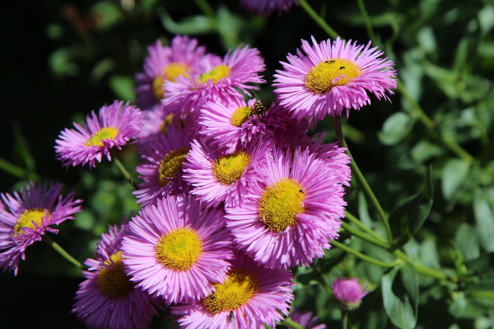 Vaste planten - De Tuinen van Appeltern