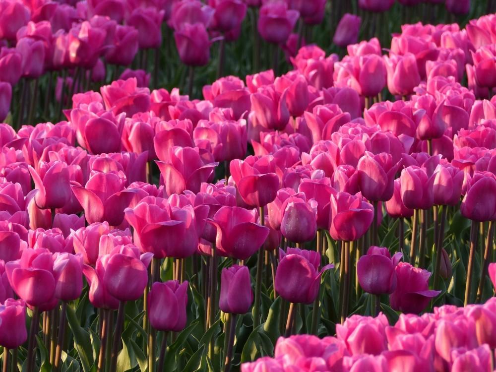 Bloembollen - De Tuinen van Appeltern