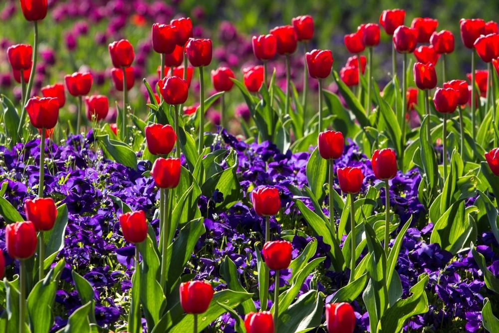 Tulpencombinaties - De Tuinen van Appeltern