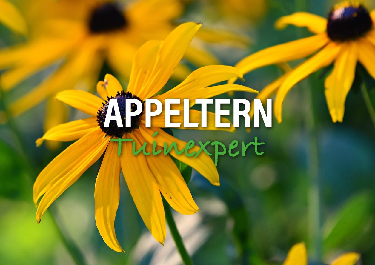 Appeltern Tuinexpert - De Tuinen van Appeltern