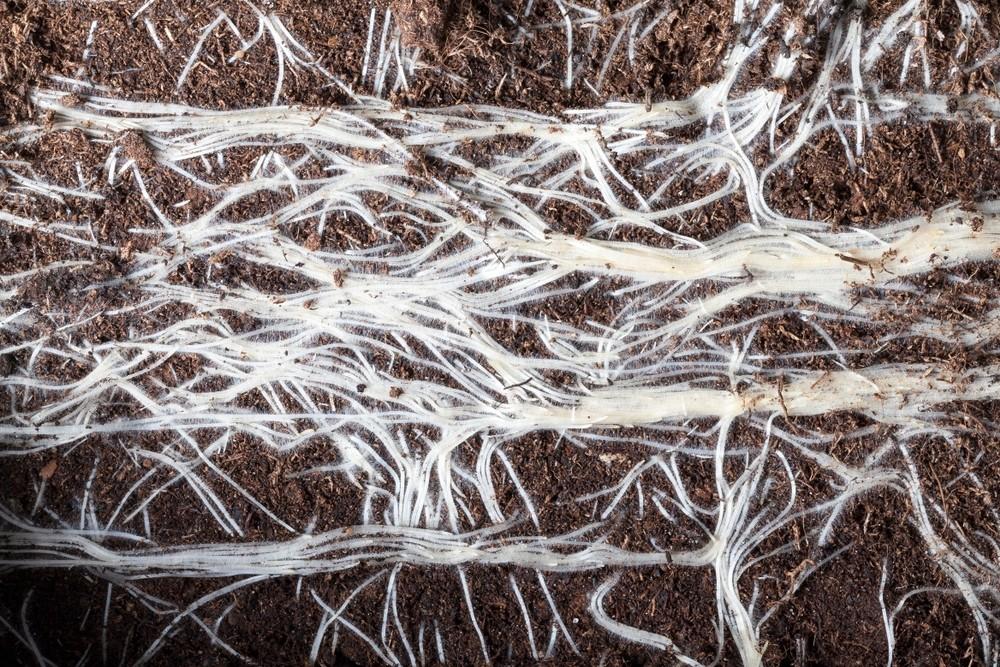 Wortels - De Tuinen van Appeltern