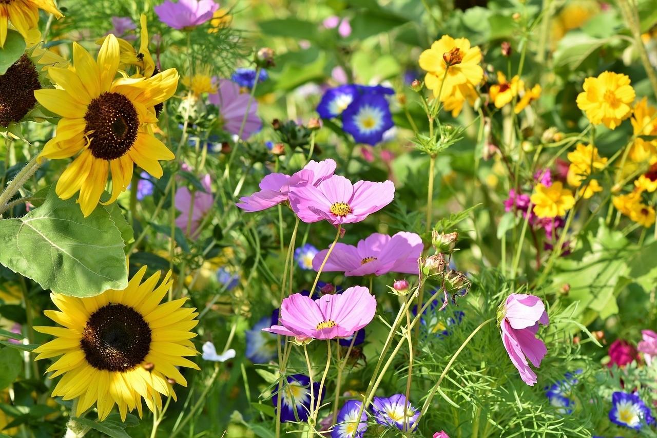 Zondagse picknick: Bloemenweides - De Tuinen van Appeltern