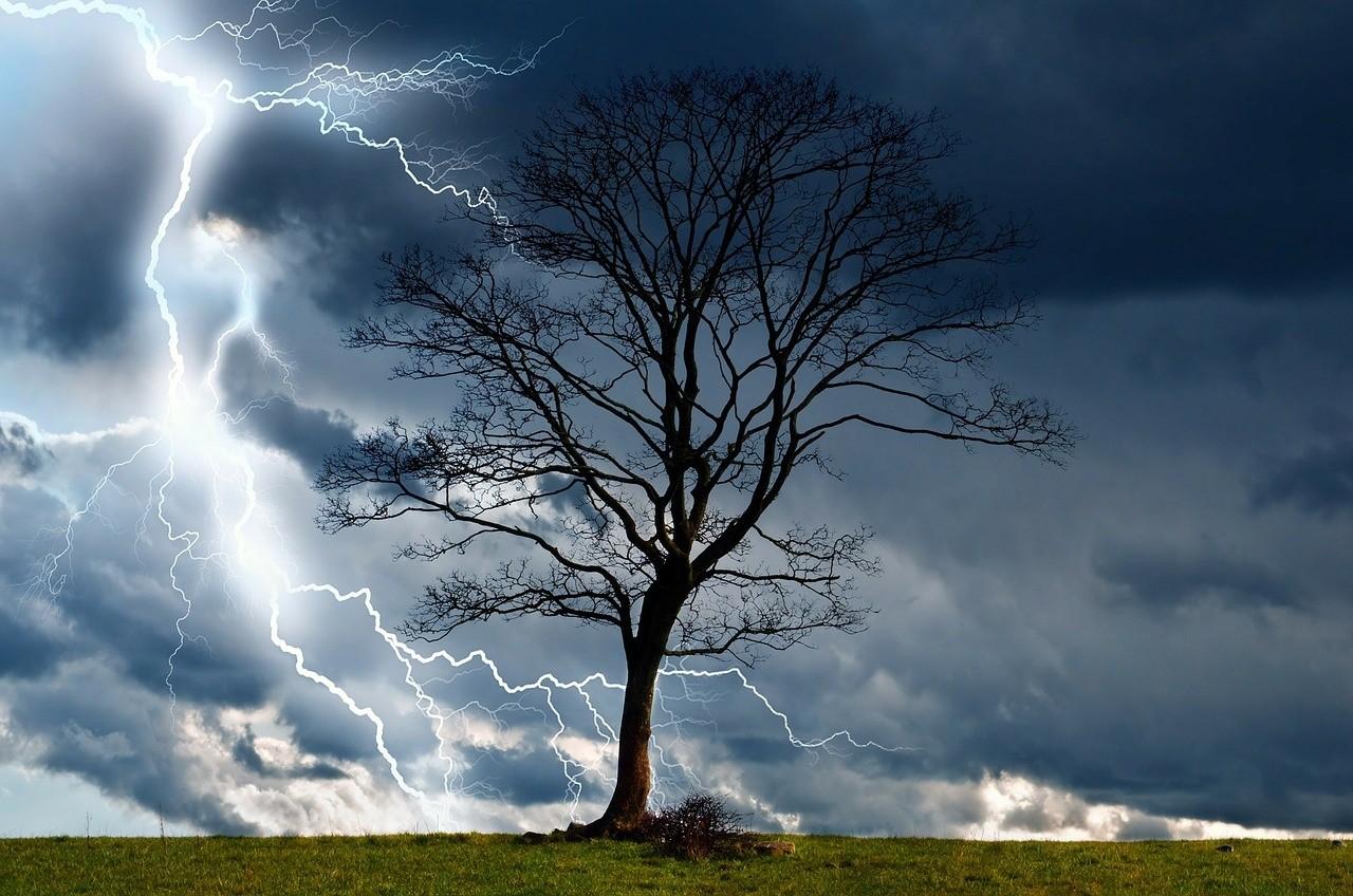 Planten voorspellen het weer - De Tuinen van Appeltern