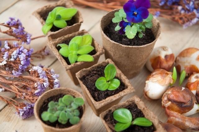 Biologisch afbreekbare potjes - De Tuinen van Appeltern