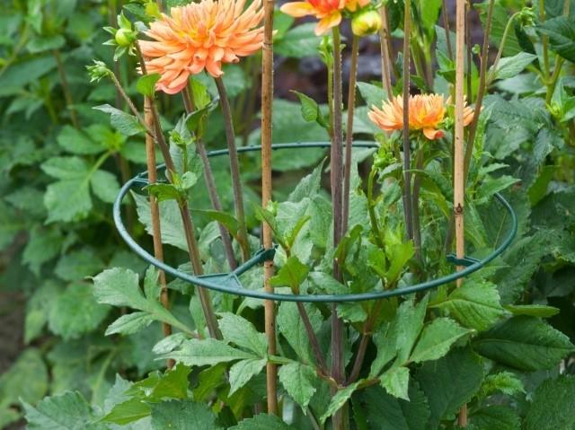 Plantensteun - De Tuinen van Appeltern
