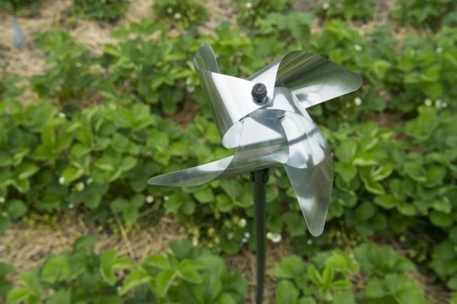 Vogelverjager - De Tuinen van Appeltern