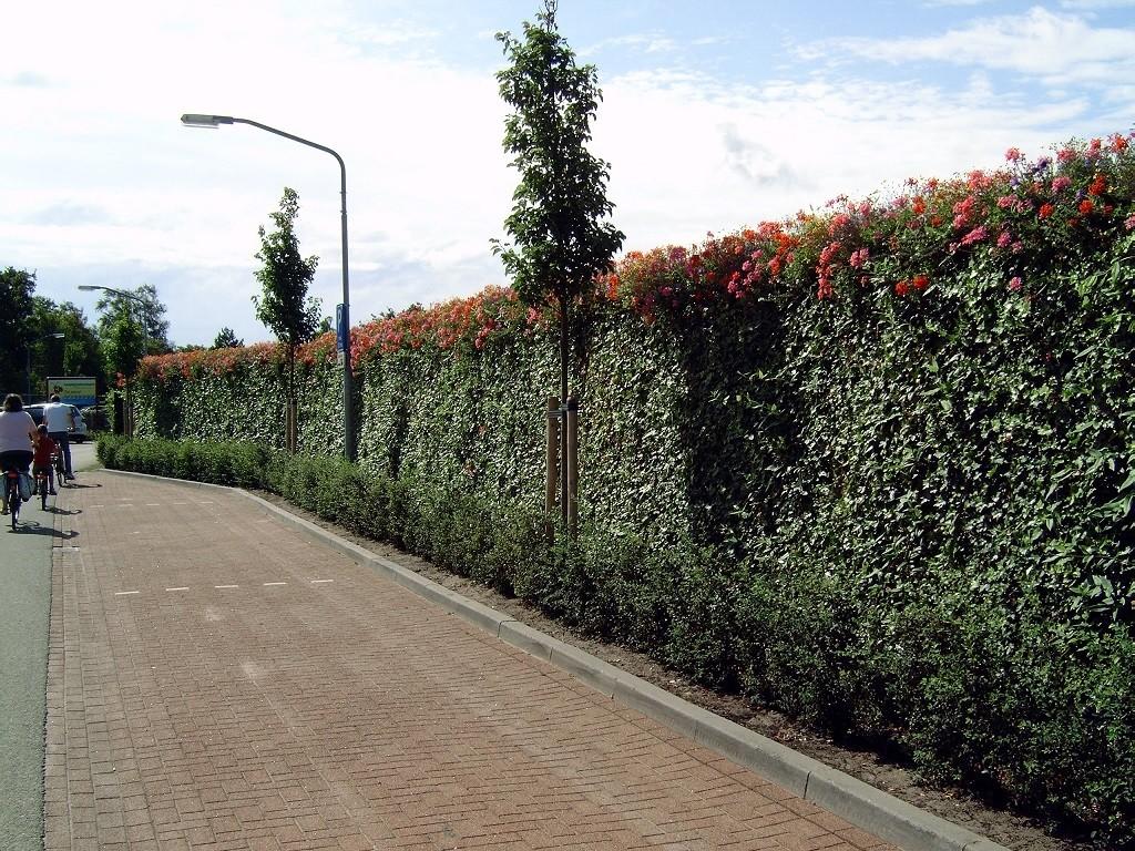Greenwall - De Tuinen van Appeltern