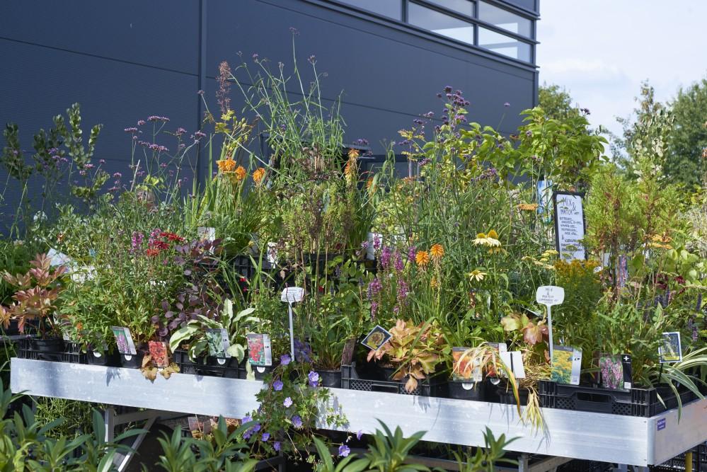 Plantenmarkt - De Tuinen van Appeltern