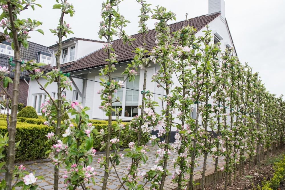 Minitree - De Tuinen van Appeltern