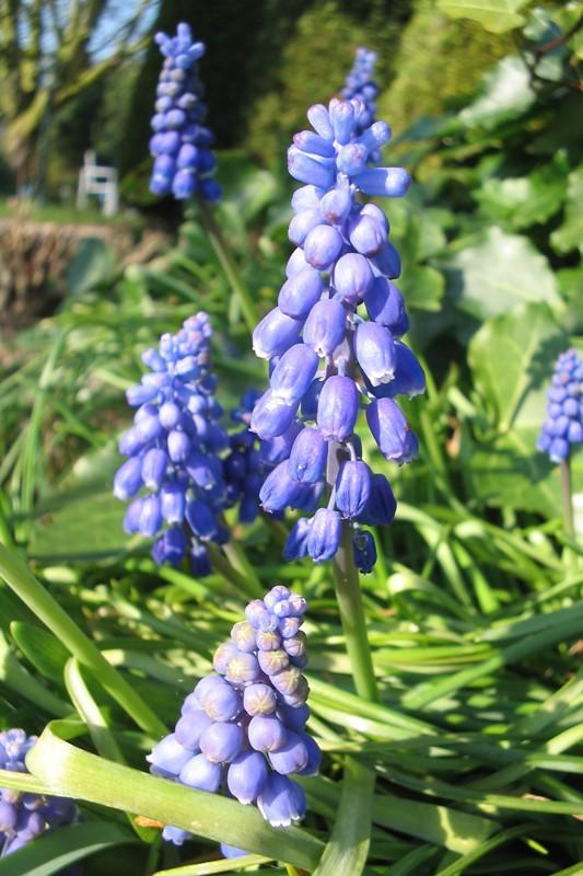 Tuintips voor februari | De Tuinen van Appeltern