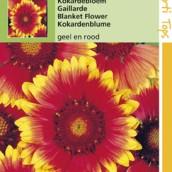 Gaillardia aristata Kokardebloem geel en rood