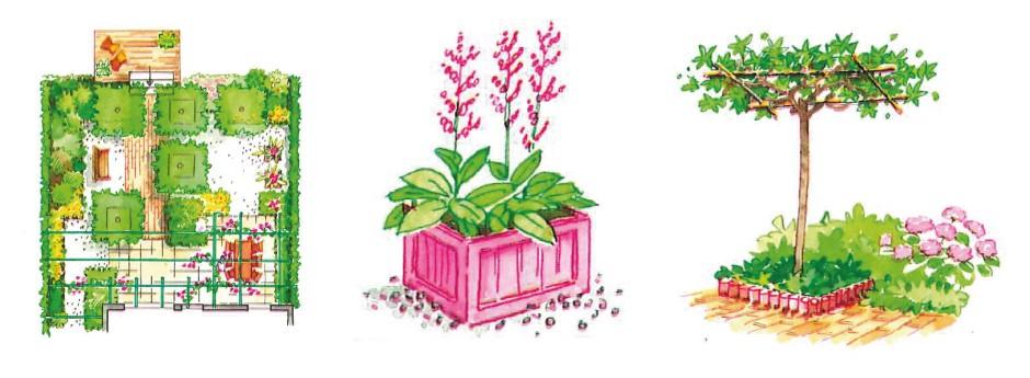 Bloemknoppen en bladknoppen