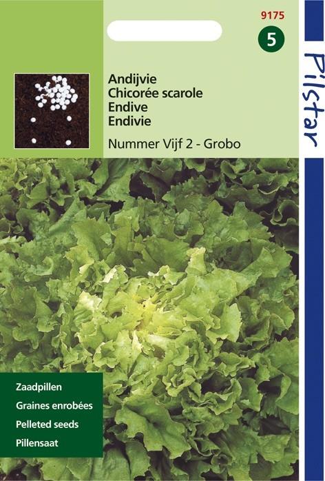 Andijvie nummer vijf (pillenzaad, Cichorum endivia) 09175.jpg