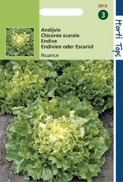 Andijvie Nuance (zaad Cichorium endivia) 12013.jpg