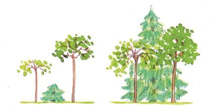 Sierwaarde van planten