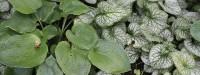 Gesloten beplanting