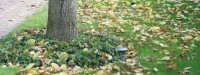 Bomen en blad