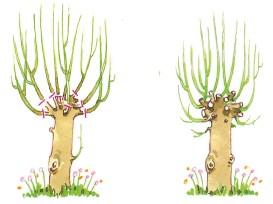 Het knotten van bomen