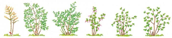 Workshop Snoeien | De Tuinen van Appeltern