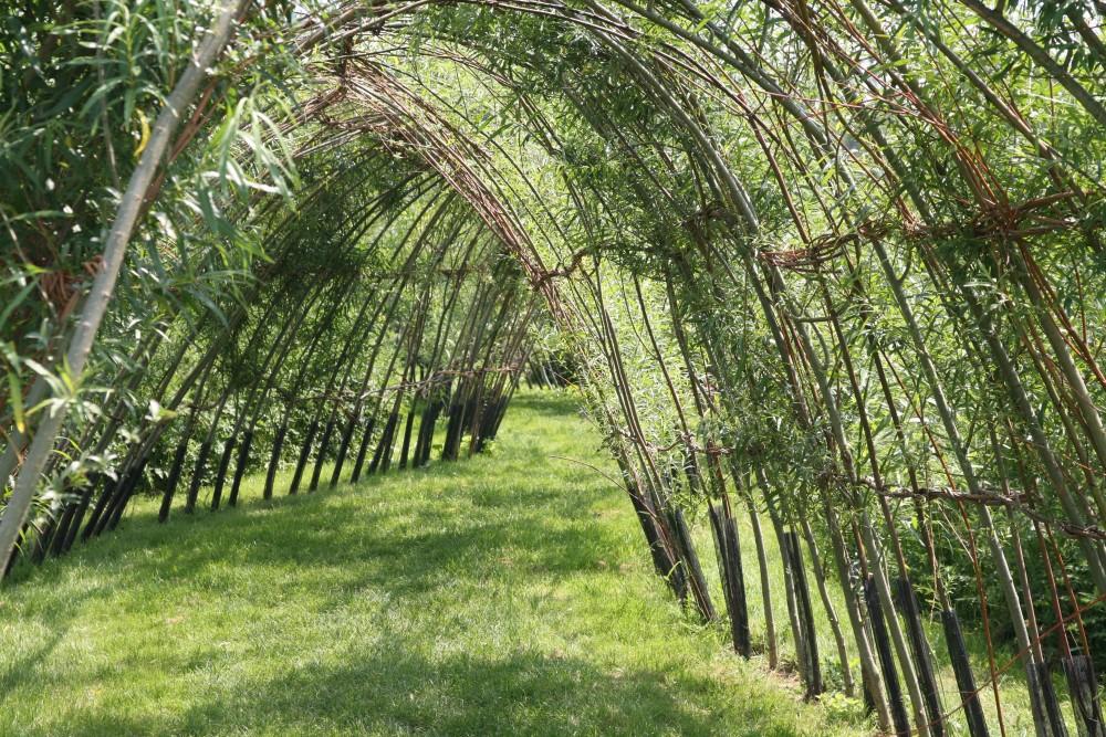 Wilgentunnels - De Tuinen van Appeltern